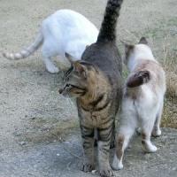 猫 ねこ ネコ    🐈   😹