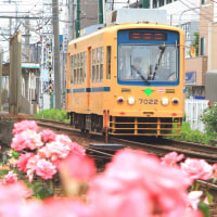 東京下町ねこ散歩Ⅳ 2016年5月 その1
