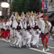 小金井阿波踊り 1