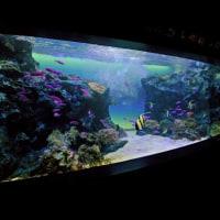 マリホ水族館 HIROSHIMA MARINA HOP