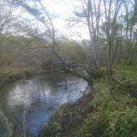 湿原河川の秋
