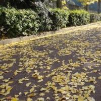 秋色を訪ねて―自転車道