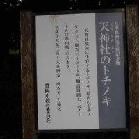 勝手に神鍋遺産 万場区の兵庫県最大のトチの木