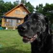 木彫りの犬。