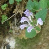 渓谷に咲いていた花