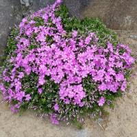 庭の花ー追加
