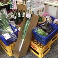 清原さんの野菜入荷です