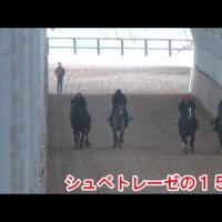 ムーランナヴァン(シュペトレーゼの15)動画更新