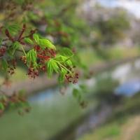 紅葉の花・・・