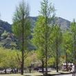 木々も空気も緑色