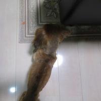 今日のサム爺 3.15kg