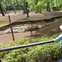 祝日みどりの日・・・井之頭自然文化園の緑を楽しむ