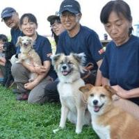捨て犬7匹、警察犬めざし訓練中