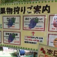 新潟市南区 白根グレープガーデンに行ってきた! Vol.1
