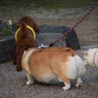 2日ぶりの犬ネタ