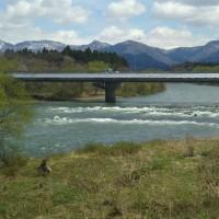 桜前線北上…   越後むらかみ 清流三面川