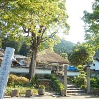 2017達身寺・新緑と1200年の歴史05/23