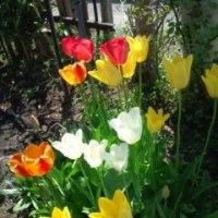 庭は花盛り
