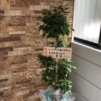 マンマチャオ鶴ヶ峰店オープンに観葉植物