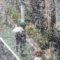 物凄い「雪」です・・・・