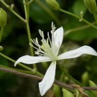 「トノサマバッタ狩り大会」事前調査~野に咲く花~