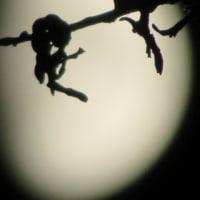 ソウルで見る月