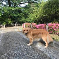 松本城の公園でパチリ