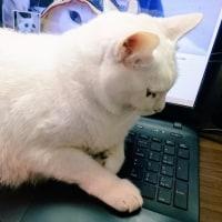 5月20日(土)のつぶやき ミルコ 白猫 ニャンサムウェア ランサムウェア キーボード ニャムロック Num Lock
