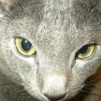 我輩は猫、名前はICHI