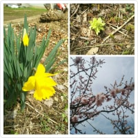 いつの間にか春が来た~のかなぁ⁉