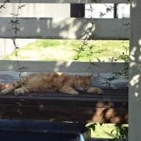 庭をフルに活用する猫