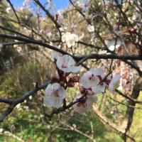 初春の鎌倉
