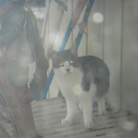 「不思議だな オーブが飛び交う 野良猫だ」   オーブ川柳
