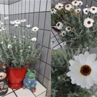 白い花!!