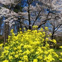 陽春のアルプス公園を歩く