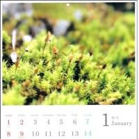 【お知らせ】コケ好きのためのカレンダー「苔暦2017」ができました。  ※12/23おかげさまで完売しました!