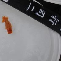 第14回秋のらんちゅう祭り品評会 弐等賞