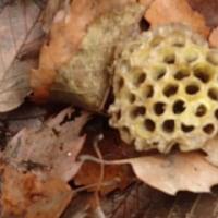 蜂の巣落ちた