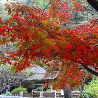 三渓園 紅葉散策