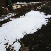 残雪の中で
