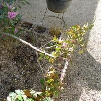 強風で鉢植えが倒れた