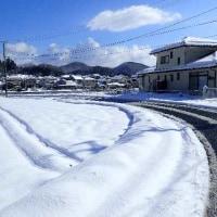 1月23日の雪
