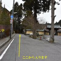 2017/03/23 高野山 バイカオウレン開花