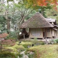 食事を終えてから、八坂神社へ。