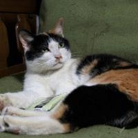 猫の名はニャニャ