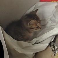 猫には住みやすい倉庫みたい(^o^)