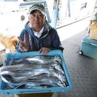 11月4日タチウオ釣果