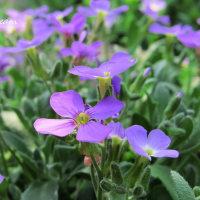 5月の庭に咲く花々
