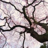 「いにしえより愛を込めて」 いわき 三島八幡にて撮影!