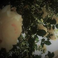 白バラ白昼夢。